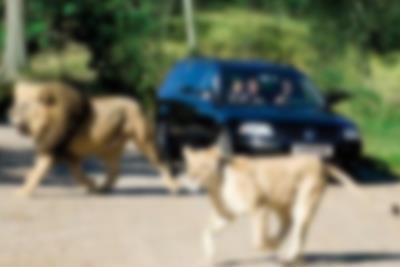 Visit Giveskud Zoo from Lalandia