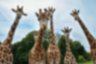Oplev Knuthenborg Safaripark